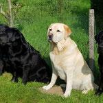13.05.2018: Storm, Finn, Jack, Corny und Josh im Müritz-Nationalpark