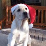 Weihnachten 2005 - 4 Monate alt