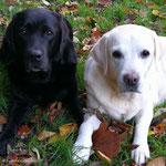 Lizzy und Emmi - eine Einheit, die beiden - Oktober 2017