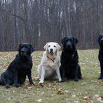 10.03.2021: Happy (H-Wurf), Rose (D-Wurf), Moe (M-Wurf), Rosi (M-Wurf)