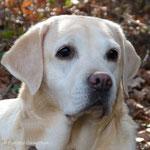 Emmi - 2015 - 10 Jahre alt