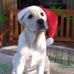 Emmi - Weihnachten 2005 - ihr erstes Weihnachten bei uns zu Haus