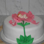 Torte 50