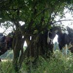 Pause im Schatten unter Bäumen