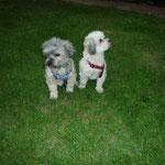 Bennie & Fannie ...