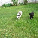 Charlene & Paige laufen um die Wette ...