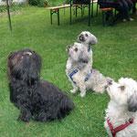 """""""Hunde-Hypnose"""" ... Fannie & Hannah & Bennie & Basko ..."""