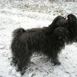 ... Schnee find ich cool ...