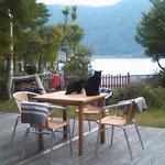 しかし猫たちはのんびりと湖を眺めています。