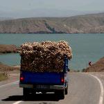 les camions qui transportent de l'ail