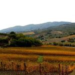 la région du Chianti, entre FLorence et Sienne