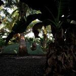 bivouac a l'ombre des cocotiers et bananiers
