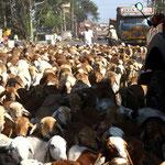 embouteillage en Andra Pradesh