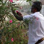 et d'autres recoltent des fleurs pour les offrandes du matin