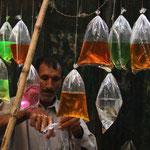 vendeur de poissons rouges à Lahore