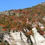 l'automne en Marche
