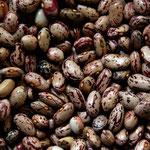 les sacs de graines