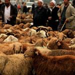marche aux bestiaux de Kashgar