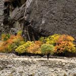 une touche d'automne