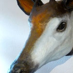 noch mal das Okapi