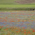 Blumenmeer - so saftig grün und farbig hätten wir uns die Türkei nicht vorgestellt