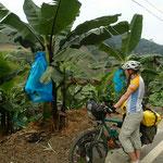 Unterwegs in den Bananenplantagen