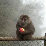 Böser Affe bei Emei Shan - soo böse erscheint er uns gar nicht