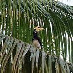Beim Frühstück beobachten die NAshornvögel welche uns noch immer faszinieren