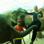 Im Elefantendorf Ban Tha Klang erleben wir die Dickhäuter aus nächster Nähe, und immer schaut der Mahouts, der Treiber, dass sie artig bleiben