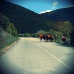 Tiere unterwegs