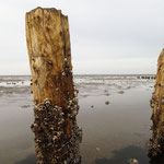 Am Wattenmeer