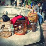 Vogelmarkt in Kunming