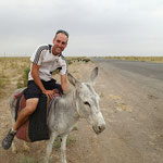 Zahmer Esel