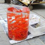 Lanzhou, Goldfische zu verkaufen