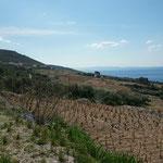Wein aus Kroatien, (noch?) nicht sehr bekannt aber uns schmeckt er!!!