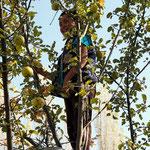 Apfelernte in Arslanbob