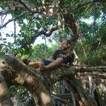 Posieren auf einem der vielen Äste des Banyan Tree in Phimai