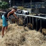 Milchwirtschaft gibt es auch in Thailand