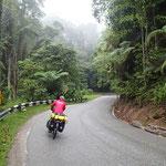 Abfahrt im Regen durch den Regenwald