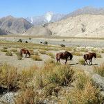 Kirgistan und viele Pferde
