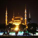 Blaue Mosche