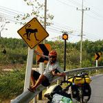 Die Affen rasen durch den Wald...