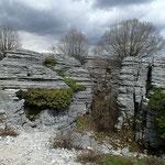 Monodendri: Stone Forest