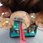 Die Holztransporter welche das wertvolle Tropenholz abtransportieren sind unbeschreiblich hässlich