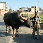 Grosser Büffel, kleiner Mann