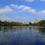 Green Lake mit seinen tausenden Möwen