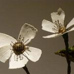 Porzellanblütenblätter zu Blumen gebildet von Karin Funke-Atmer