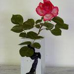 Rose in quadratischer Porzellanvase