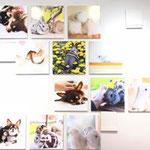 モフモフ写真展。犬、鳥、ウサギの写真展