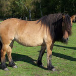 Kilnacasan Honey (*15.03.2004) Ruraidh of Tormore X Fourmerk Heather